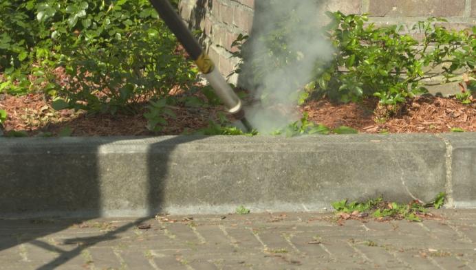Elektrisch onkruid wieden in Oudenaarde
